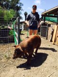 "Alexa taking ""Bessy"" for a walk.  Exercising your animal is a key part of raising healthy meat."